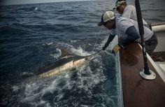 Jessica Haydahl Richardson captures the offshore life of Panama.