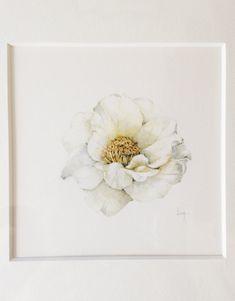 Original Botanical Watercolor on paper of Camellia