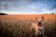 dogs » scruffy dog photography | best professional pet photographer blog serving Toronto and Ontario