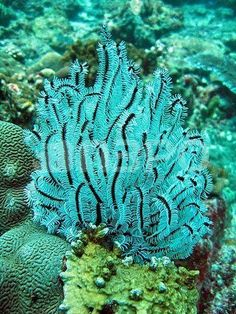 Beautiful turquoise coral.