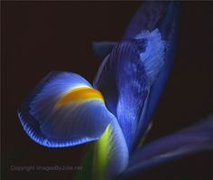 #art #design #flower #fineart #imagesbyjulie #juliepowell #macro #photography #unaltered #lily #blue
