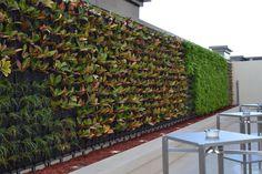 WESTIN ABU DHABI GOLF RESORT. Instalación de Minigarden Vertical en hotel.