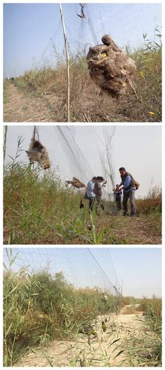 Illegal bird hunting operation uncovered in Tianjin  Law enforcement authorities in north China's Tianjin Municipality are investigating illegal bird trapping after more than 5,000 dead birds were found in hunters' netting strung between trees and stretching 10,000 meters near a local wetland.  NGO staff discovered the nets and bodies of the migratory birds on September 29, and have since been racing to clear the traps and free any live birds caught in them. The volunteers had saved more…