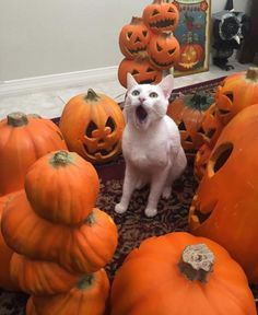 This is Halloween! This is Halloween!