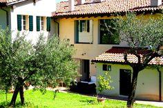gli ulivi di Cà Bianca  olives trees at Cà Bianca # wedding destination bologna