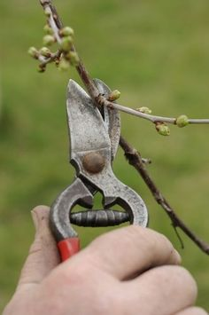 Pruning Shears, Gardening Tips, Garden Tools, Backyard, Fruit, Green, Vegetables, Garden, Lawn And Garden