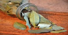 Bay leaves are utilized as a healing herb for a large number of years; nevertheless the old Greeks and Romans considered this plant ...