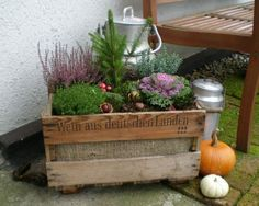 Deco by Landratte: No no No one's going to move in here . 2 at the flea market happy like everyone else here I find your decoration very pretty Fall Planters, Garden Planters, Gemüseanbau In Kübeln, Container Gardening Vegetables, Succulent Containers, Vegetable Gardening, Square Foot Gardening, Container Flowers, Container Plants