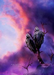 Spirit Of The Wild - Birds Of Prey - Strange Togetherness by Carol Cavalaris