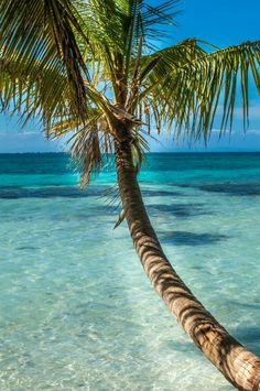 "http://pin.sanctuarybelize.com Let's live by the Belizean motto, ""Under teh shade, I flourish""...#discoverbelize"