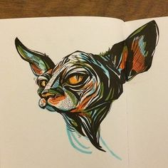 Sphynx Cat - sketch by Jacqui Oakley