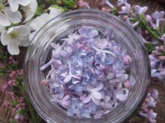 Lilac jelly and infused sugar recipe - this also tells you how to clean lilac which will be useful for other recipes.