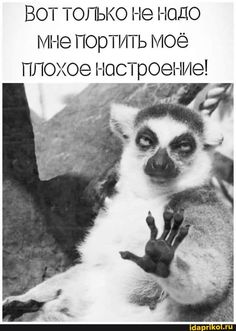 Russian Jokes, Funny Expressions, Funny Phrases, Funny Faces, Positive Quotes, Funny Animals, Lol, Positivity, Lettering