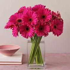 A simple cluster of gerbera daisies catch the eye Daisy Centerpieces, Centerpiece Ideas, Pink Gerbera, Pink Flowers, Vintage Wedding Flowers, Gerber Daisies, Flower Decorations, Floral Arrangements, Beautiful Flowers