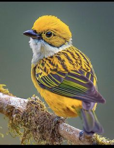 Cute Birds, Pretty Birds, Birds Pics, Exotic Birds, Colorful Birds, Exotic Pets, Beautiful Creatures, Animals Beautiful, Most Beautiful Birds