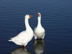 Couple. by Awes Amin