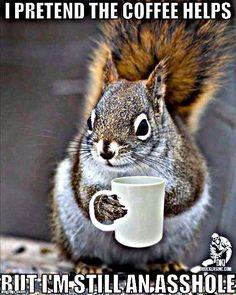 Good Morning Animals, Good Morning Quotes, Military Memes, I Love Coffee, Love My Job, Bird, Funny, Squirrels, Humor