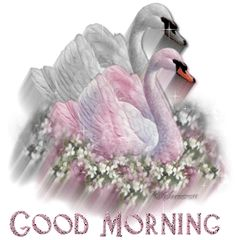 Good Morning GIF Animation | ... http animatedimagepic com good morning animated image good morning