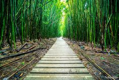 Pipiwai Trail, Maui, Hawaii | Hawaii Pictures of the Day