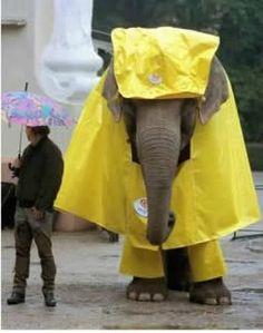 funny elephant wearing a yellow rain coat