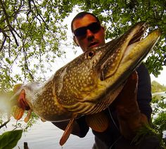 Video best of Yodlures shads 2015