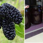 A daganatos megbetegedések megelőzésében, a cukorbetegség és a magas vérnyomás enyhítésében is használják! Ki tudja mi ez a gyümölcs? - Szupertanácsok Blackberry, Fruit, Food, Lilac, Essen, Blackberries, Meals, Yemek, Rich Brunette