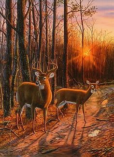 """""""On The Road Again"""" - Whitetail Deer"""