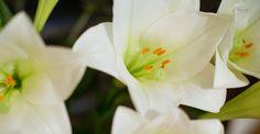 KW 45 langstielig: BLUE IVY | 5 Lilien und 4 Disteln für Ihre Bodenvase | BLOOMY DAYS