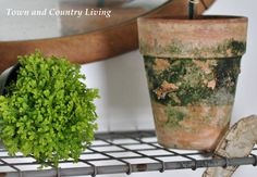 Add interest to everyday houseplants by planting them in moss covered garden pots. Today I'm sharing a moss-propagating recipe with you to create them.