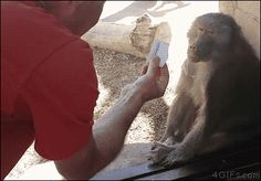Baboon amazed by magic. [video]