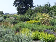 Vinca-tuin in volle bloei