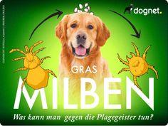 Information - Jeder Hundebesitzer kennt es, der Sommer kommt und das toben auf grünen Wiesen ist die Lieblingsbeschäftigung unserer Fellnasen. Kurz danach fangen sie an sich heftig zu jucken. Die Ursache sind meistens Grasmilben.