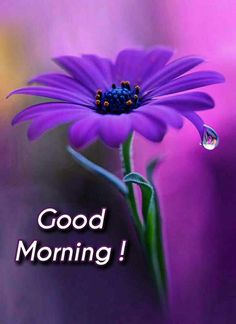 Good morning images with beautiful flowers Sunday Morning Images, Happy Sunday Pictures, Latest Good Morning Images, Good Morning Beautiful Images, Good Morning Happy Sunday, Good Morning Picture, Good Morning Greetings, Morning Pictures, Good Morning Wishes