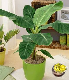 38 Best Indoor Tropical Plants Images Indoor Plants