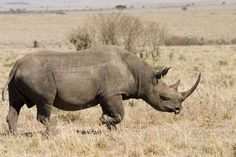 Photos from our Kenya 2006 adventure.  Black Rhino