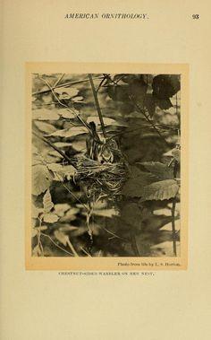 American bird magazine, ornithology