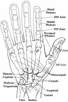 fayetteville arkansas hand anatomy and the o 39 jays on pinterest : hand bones diagram - findchart.co