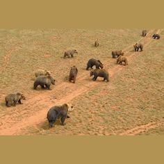 Osos pardos en el del Parque de la Naturaleza de Cabarceno /// Grizzly bears in Cabarceno Natural Park . Cabarceno, Cantabria, Spain . Agosto de 2012 . Fotografía de Eloy Mejias . #eloymejias #cabarceno #cantabria #animal #animales #animals #parque #park #nature #natural #naturaleza #reservanatural #oso #bear #grizzly #osopardo #grizzlybear #parquedelanaturalezadecabarceno #parquedecabarceno #wild #savage #salvaje #followback #beautiful #interesting #zoo #zoologico #littlespark #fauna