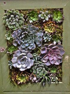 Make an eye catching #succulent garden using a repurposed antique medicine cabinet!  Find Studio One Twenty Three West on Facebook! https://www.facebook.com/pages/Studio-One-Twenty-Three-West/226244420908093?fref=photo