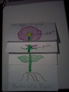 parts of a plant - scientific foldable