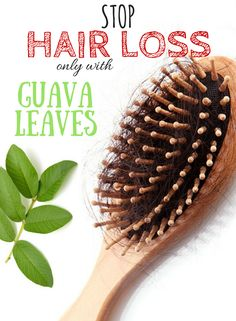 Stop hair loss and make it grow again fast with guava leaves - HOME REMEDY SECRET