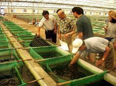 Milestone Looms for Farm-Raised Fish