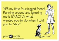 """E-card: Yes, my little four-legged friend. Running around and ignoring me is EXACTLY what I wanted you to do when I told you to """"stay."""""""