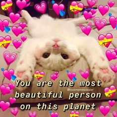 Cat Memes, Funny Memes, Wholesome Pictures, Couple Memes, Cute Love Memes, Boyfriend Memes, Funny Reaction Pictures, Cute Messages, Cute Texts