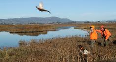 5 things to get you excited for upland bird hunting.