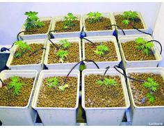 https://www.lajuana.cl/ - La Juana Growshop centro de jardinería avanzada.  La Juana Growshop, somos expertos en cultivo con más de 600 productos a tu disposición, semillas de marihuana de los mejores bancos del mundo, armarios de cultivo, kits de cultivo indoor, iluminación, ventilación, una gran variedad de fertilizantes,  #SemillasdeMarihuana, #Cultivoindoor, #Growshop