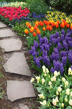 Beautiful tulips next to stone path garden idea