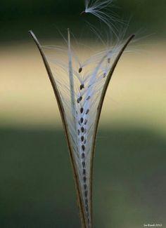 Finiiiisimas semillas