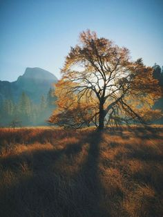 Autumn morning, Half Dome, and an Elm Tree / via James Forbes