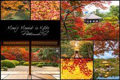 """Momiji Moment in Kyoto"" - แนะนำสถานที่ท่องเที่ยวชมใบไม้เปลี่ยนสีใน Kyoto พร้อมวิธีการเดินทาง และข้อมูลต่างๆ"